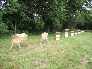 How to Start Natural Beekeeping - for free!